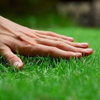Lawn Care Brixton