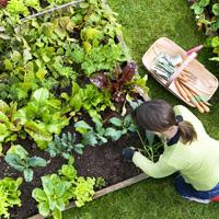 Garden Maintenance Brixton