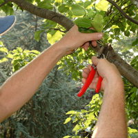 Tree Pruning Brixton