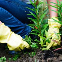 Weeding & Pruning Brixton